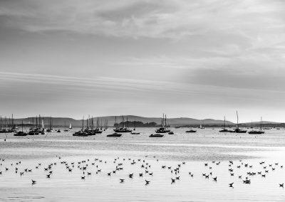 Blick vom Strand in Südengland auf das Meer mit vielen Vögeln im seichten Wasser und Booten im Hintergrund