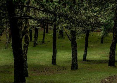 Kleiner Wald auf Madeira